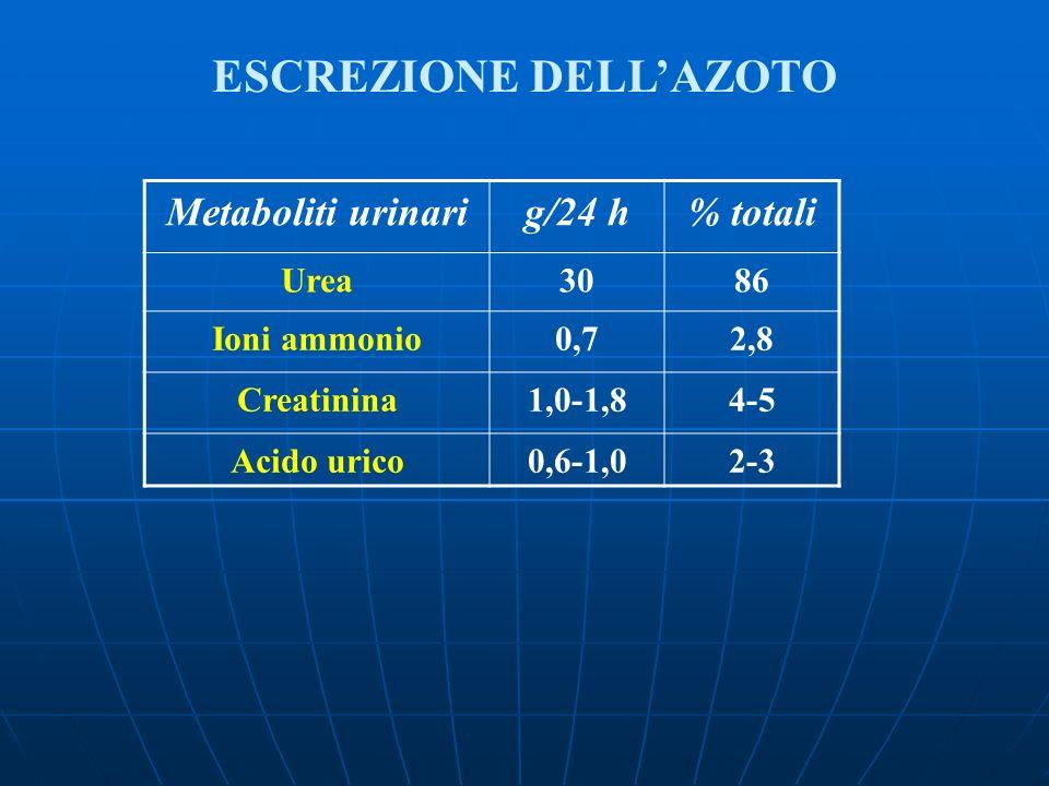 ESCREZIONE DELLAZOTO Metaboliti urinarig/24 h% totali Urea3086 Ioni ammonio0,72,8 Creatinina1,0-1,84-5 Acido urico0,6-1,02-3
