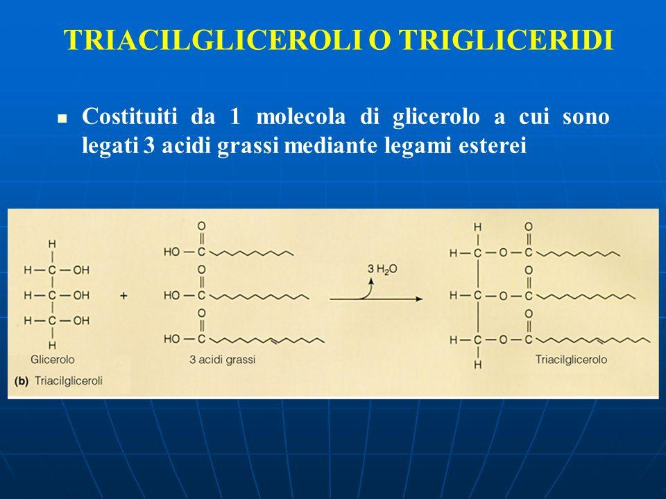 TRIACILGLICEROLI O TRIGLICERIDI Costituiti da 1 molecola di glicerolo a cui sono legati 3 acidi grassi mediante legami esterei