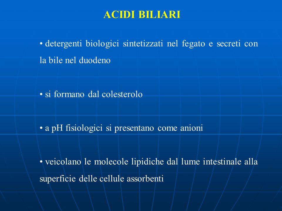 ACIDI BILIARI detergenti biologici sintetizzati nel fegato e secreti con la bile nel duodeno si formano dal colesterolo a pH fisiologici si presentano