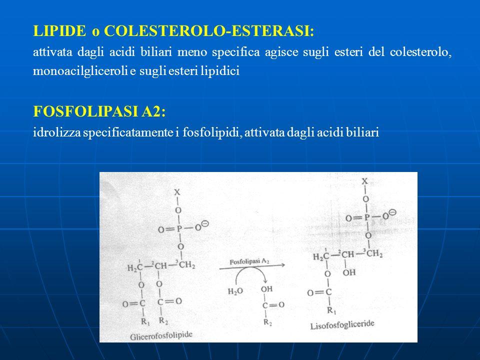 LIPIDE o COLESTEROLO-ESTERASI: attivata dagli acidi biliari meno specifica agisce sugli esteri del colesterolo, monoacilgliceroli e sugli esteri lipid