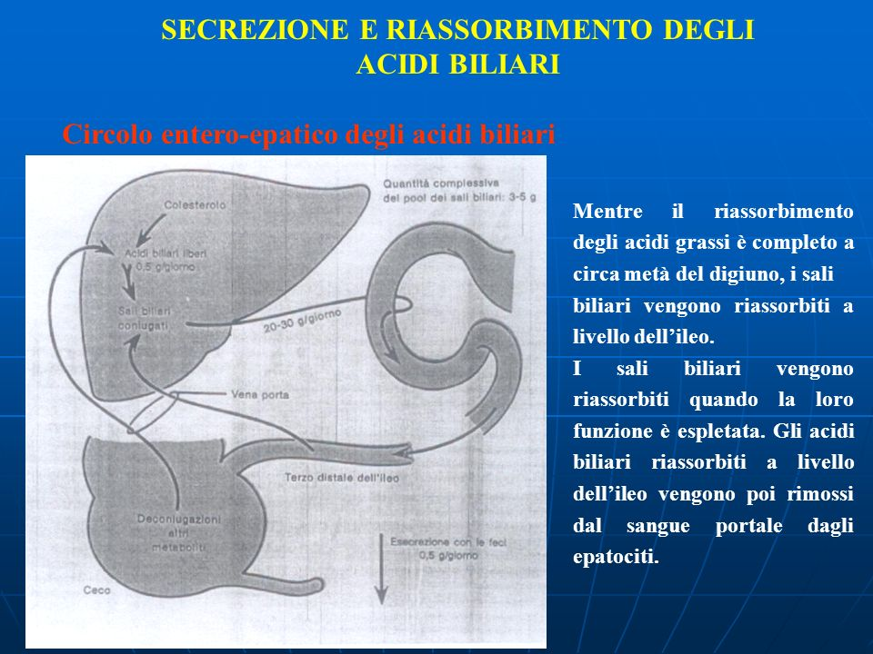 SECREZIONE E RIASSORBIMENTO DEGLI ACIDI BILIARI Circolo entero-epatico degli acidi biliari Mentre il riassorbimento degli acidi grassi è completo a ci