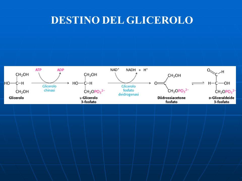 DESTINO DEL GLICEROLO