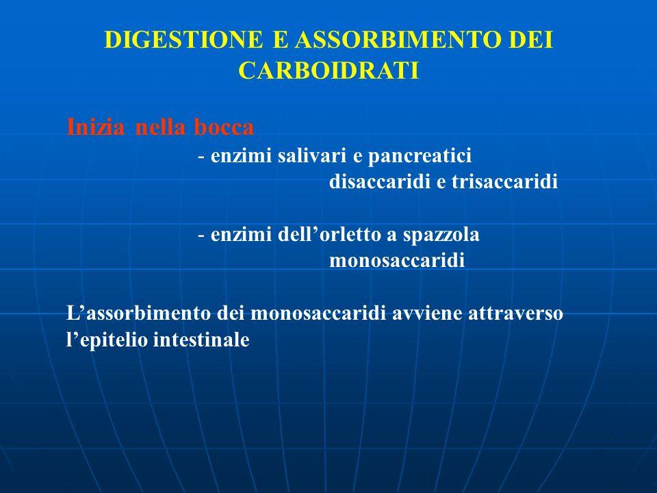 DIGESTIONE E ASSORBIMENTO DEI CARBOIDRATI Inizia nella bocca - enzimi salivari e pancreatici disaccaridi e trisaccaridi - enzimi dellorletto a spazzol