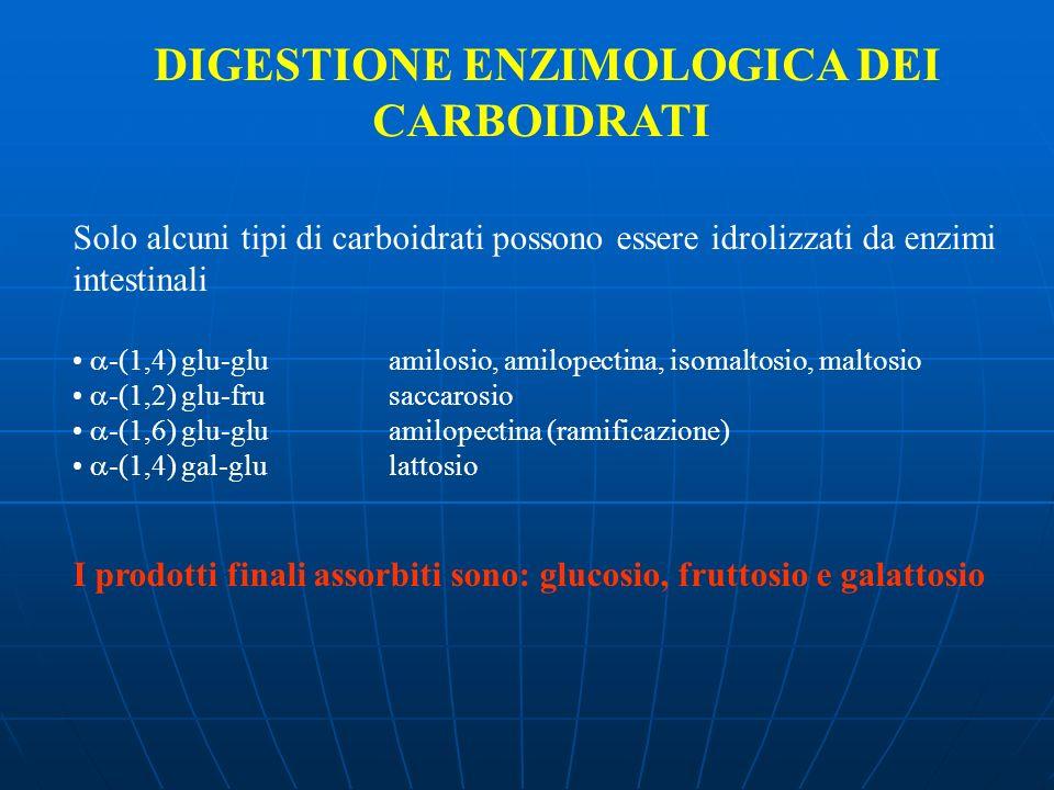 DIGESTIONE ENZIMOLOGICA DEI CARBOIDRATI Solo alcuni tipi di carboidrati possono essere idrolizzati da enzimi intestinali -(1,4) glu-gluamilosio, amilo