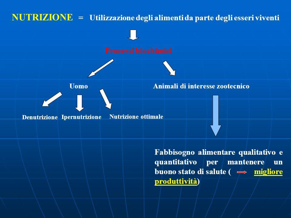 NUTRIZIONE = Utilizzazione degli alimenti da parte degli esseri viventi Processi biochimici Uomo Animali di interesse zootecnico Nutrizione ottimale D