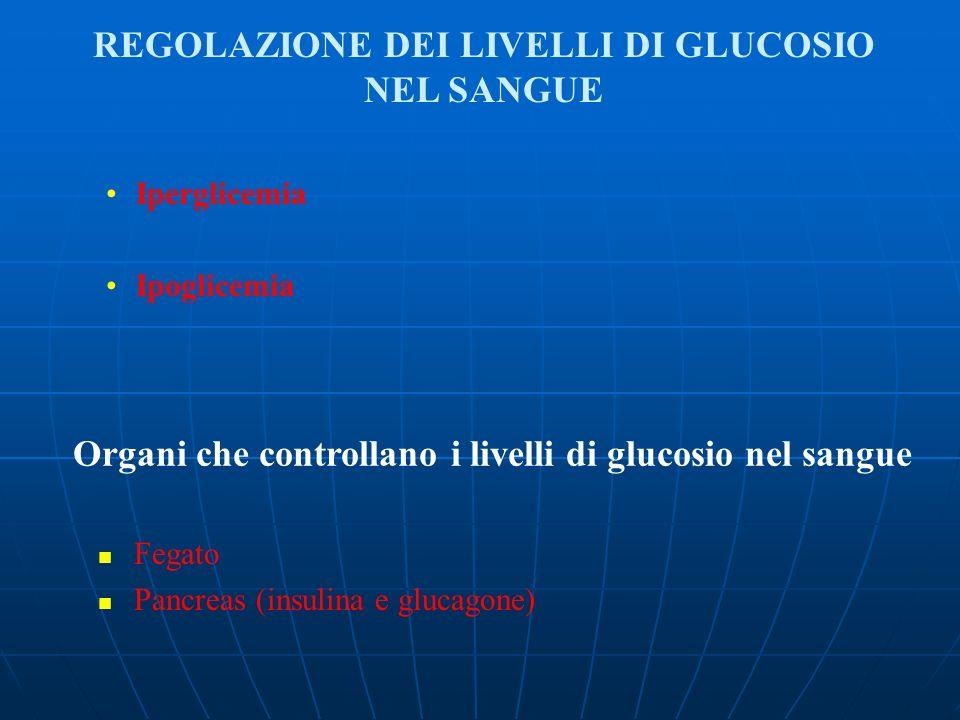 Iperglicemia Ipoglicemia Organi che controllano i livelli di glucosio nel sangue Fegato Pancreas (insulina e glucagone) REGOLAZIONE DEI LIVELLI DI GLU
