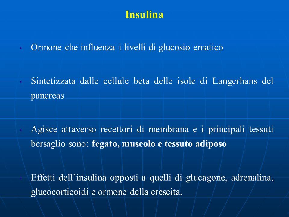 Insulina Ormone che influenza i livelli di glucosio ematico Sintetizzata dalle cellule beta delle isole di Langerhans del pancreas Agisce attaverso re