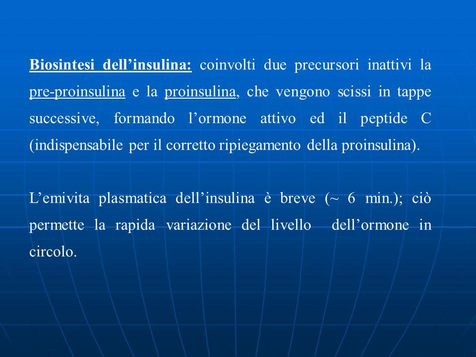Biosintesi dellinsulina: coinvolti due precursori inattivi la pre-proinsulina e la proinsulina, che vengono scissi in tappe successive, formando lormo