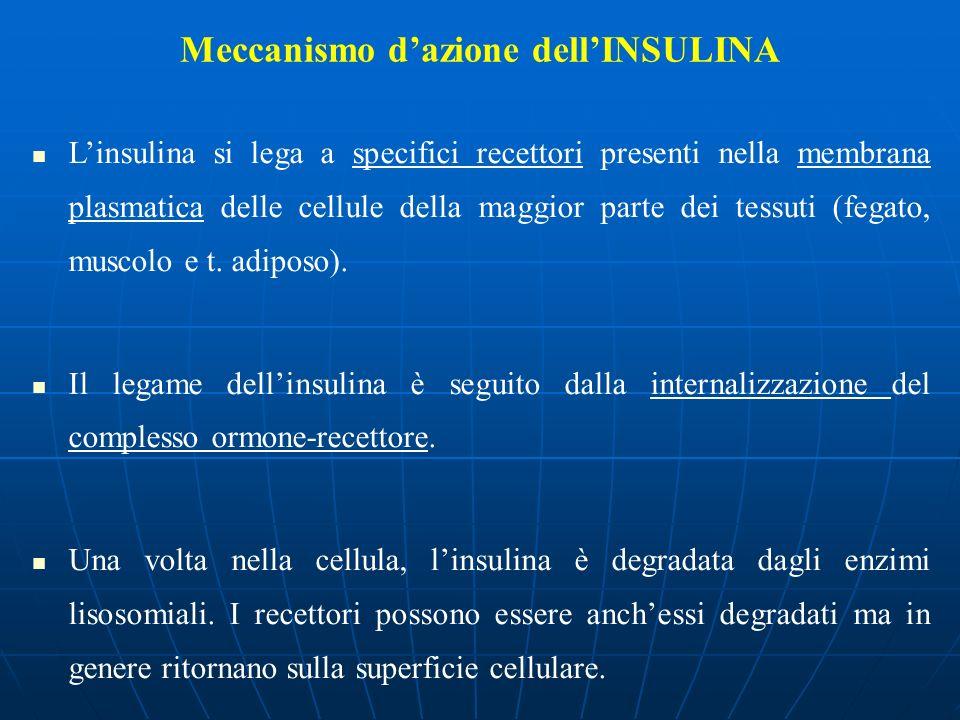 Meccanismo dazione dellINSULINA Linsulina si lega a specifici recettori presenti nella membrana plasmatica delle cellule della maggior parte dei tessu