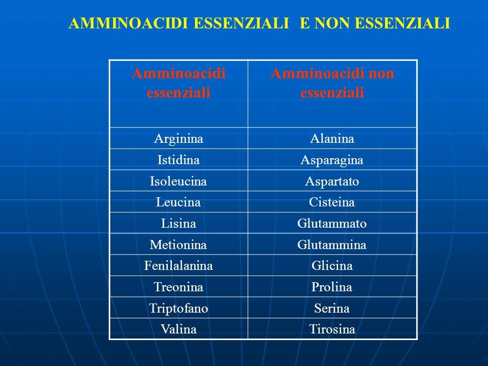 Amminoacidi essenziali Amminoacidi non essenziali ArgininaAlanina IstidinaAsparagina IsoleucinaAspartato LeucinaCisteina LisinaGlutammato MetioninaGlu
