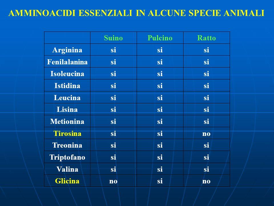 AMMINOACIDI ESSENZIALI IN ALCUNE SPECIE ANIMALI SuinoPulcinoRatto Argininasi Fenilalaninasi Isoleucinasi Istidinasi Leucinasi Lisinasi Metioninasi Tir