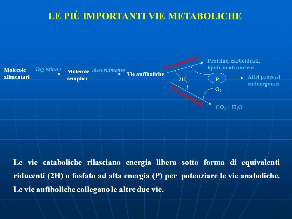 Molecole alimentari Digestione Molecole semplici Assorbimento Vie anfiboliche O 2 Vie anaboliche Proteine, carboidrati, lipidi, acidi nucleici Vie cat