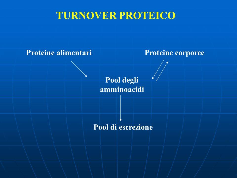 TURNOVER PROTEICO Proteine alimentariProteine corporee Pool degli amminoacidi Pool di escrezione
