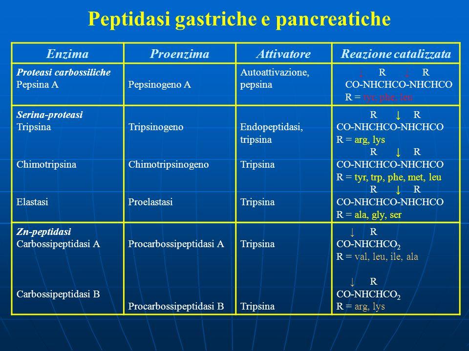 Peptidasi gastriche e pancreatiche EnzimaProenzimaAttivatoreReazione catalizzata Proteasi carbossiliche Pepsina APepsinogeno A Autoattivazione, pepsin