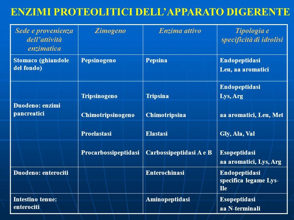 ENZIMI PROTEOLITICI DELLAPPARATO DIGERENTE Sede e provenienza dellattività enzimatica ZimogenoEnzima attivoTipologia e specificità di idrolisi Stomaco