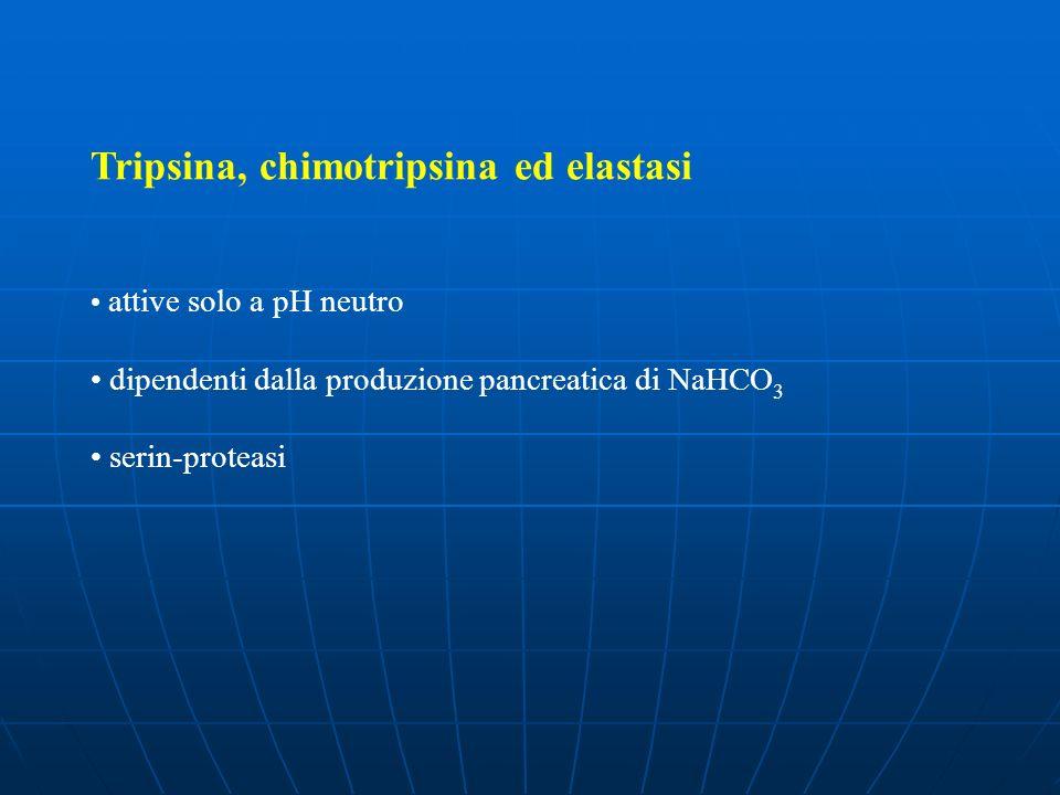 Tripsina, chimotripsina ed elastasi attive solo a pH neutro dipendenti dalla produzione pancreatica di NaHCO 3 serin-proteasi