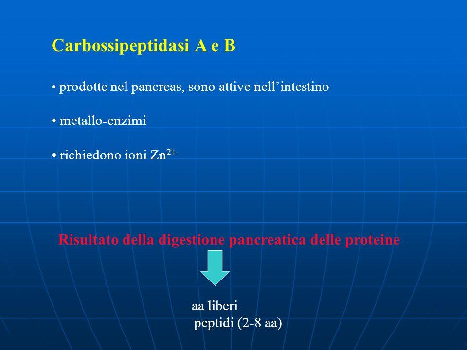 Carbossipeptidasi A e B prodotte nel pancreas, sono attive nellintestino metallo-enzimi richiedono ioni Zn 2+ Risultato della digestione pancreatica d