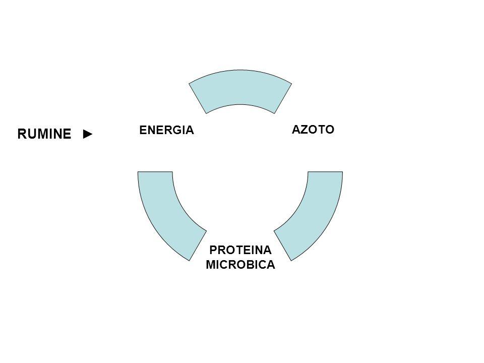 RUMINE AZOTO PROTEINA MICROBICA ENERGIA