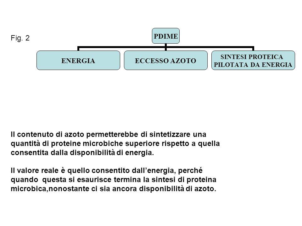 Fig. 2 Il contenuto di azoto permetterebbe di sintetizzare una quantità di proteine microbiche superiore rispetto a quella consentita dalla disponibil