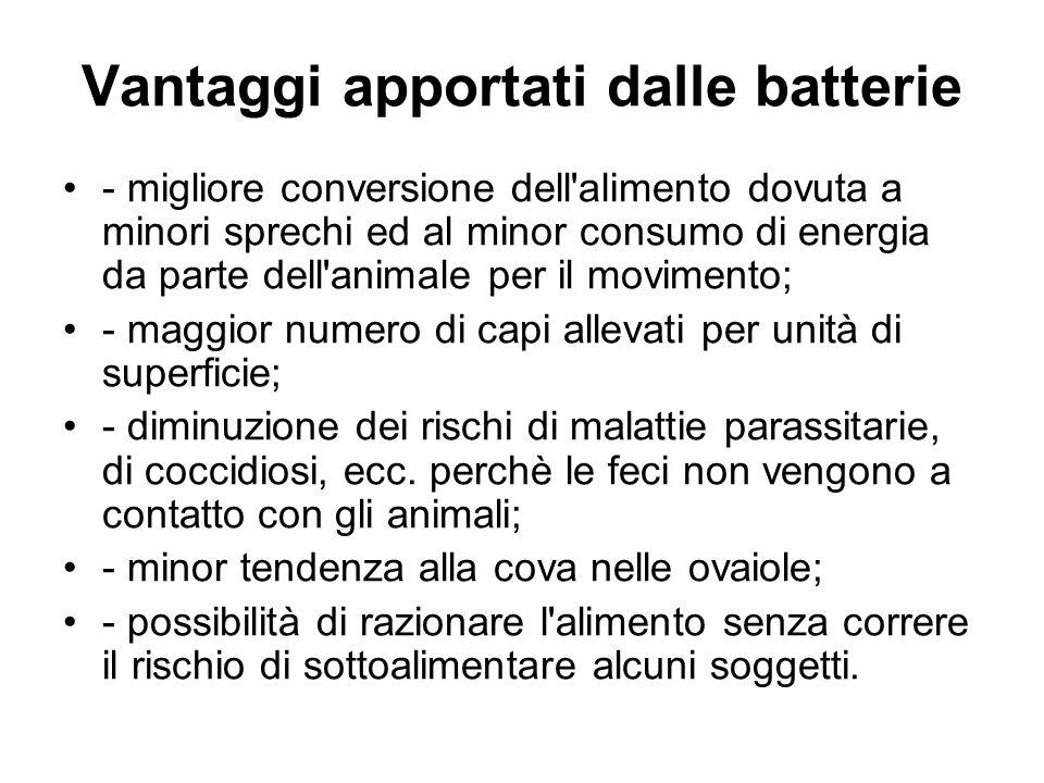 Vantaggi apportati dalle batterie - migliore conversione dell'alimento dovuta a minori sprechi ed al minor consumo di energia da parte dell'animale pe