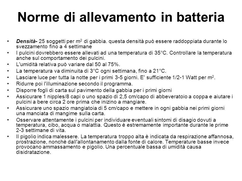 Norme di allevamento in batteria Densità- 25 soggetti per m 2 di gabbia.