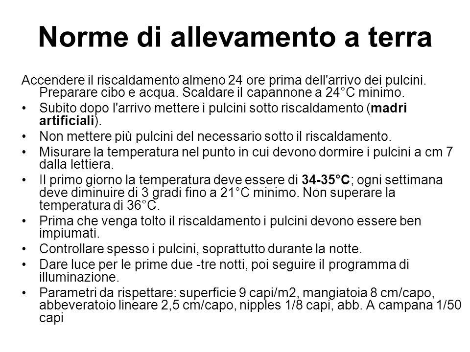 Norme di allevamento a terra Accendere il riscaldamento almeno 24 ore prima dell arrivo dei pulcini.