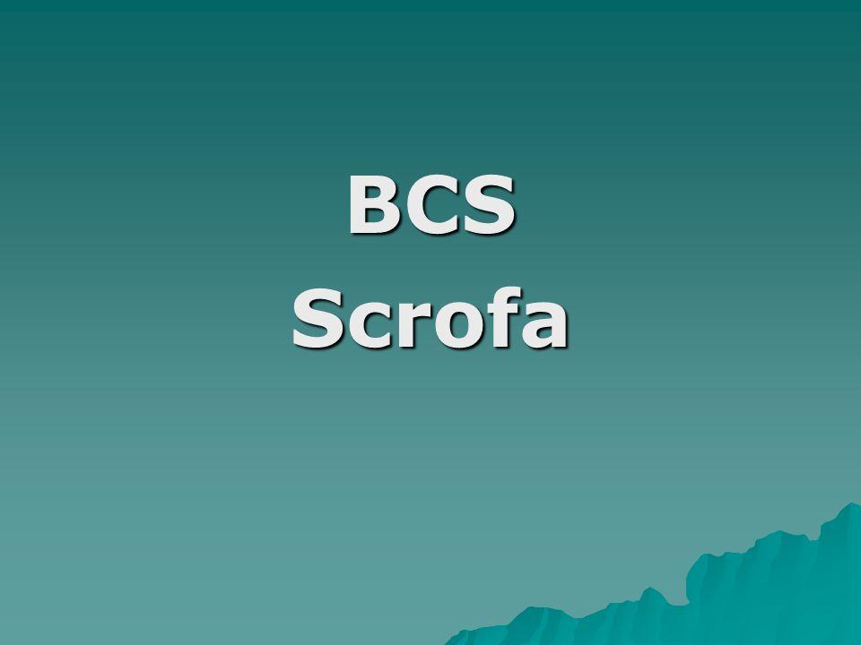 BCSScrofa