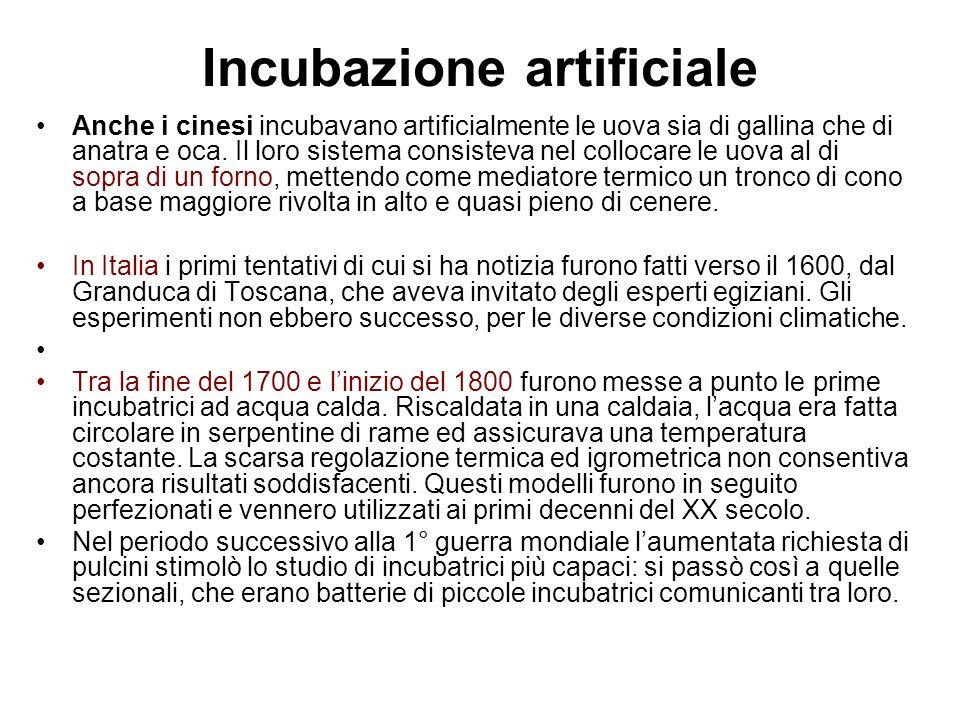 Incubatoi ed incubatrici L incubazione artificiale deve pertanto disporre sia di apposite apparecchiature (Incubatrici, macchine per l incubazione e la schiusa) sia di locali idonei per la loro sistemazione (incubatoi).