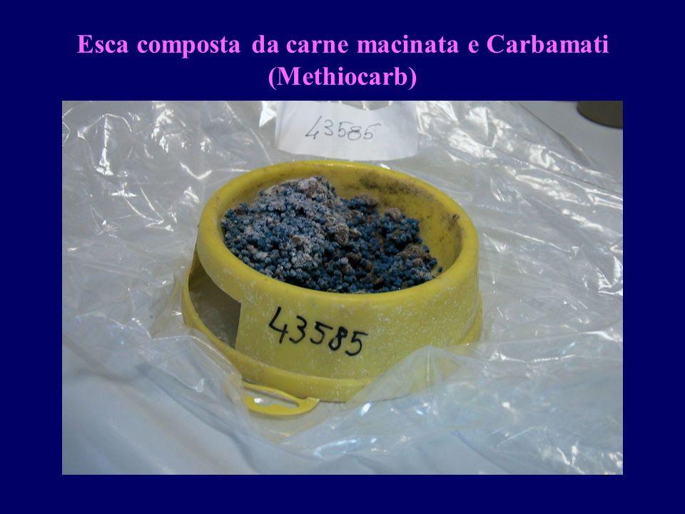 gdr Esca composta da carne macinata e Carbamati (Methiocarb)