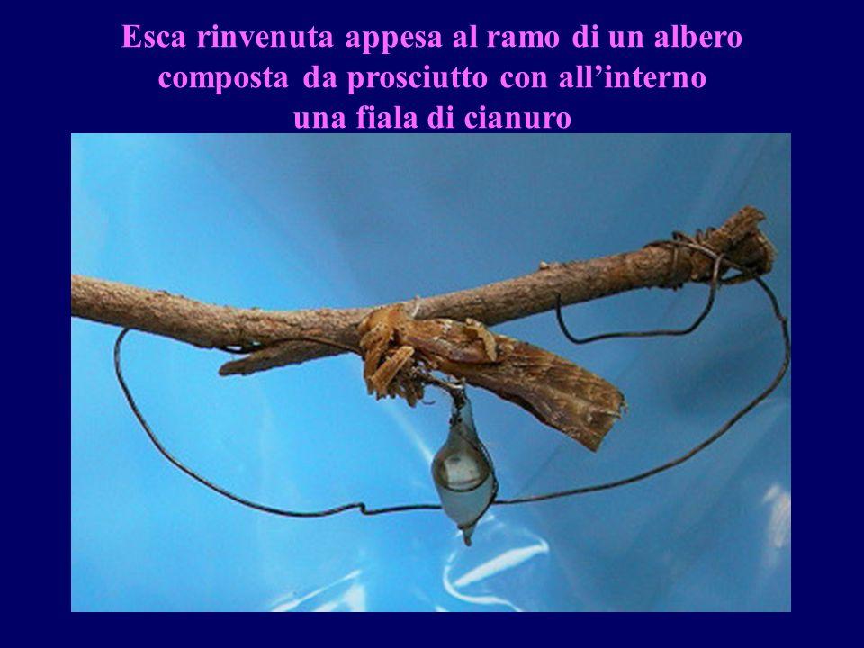 gdr Esca rinvenuta appesa al ramo di un albero composta da prosciutto con allinterno una fiala di cianuro