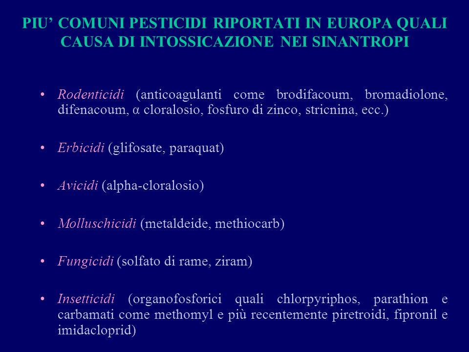 PIU COMUNI PESTICIDI RIPORTATI IN EUROPA QUALI CAUSA DI INTOSSICAZIONE NEI SINANTROPI Rodenticidi (anticoagulanti come brodifacoum, bromadiolone, difenacoum, α cloralosio, fosfuro di zinco, stricnina, ecc.) Erbicidi (glifosate, paraquat) Avicidi (alpha-cloralosio) Molluschicidi (metaldeide, methiocarb) Fungicidi (solfato di rame, ziram) Insetticidi (organofosforici quali chlorpyriphos, parathion e carbamati come methomyl e più recentemente piretroidi, fipronil e imidacloprid)