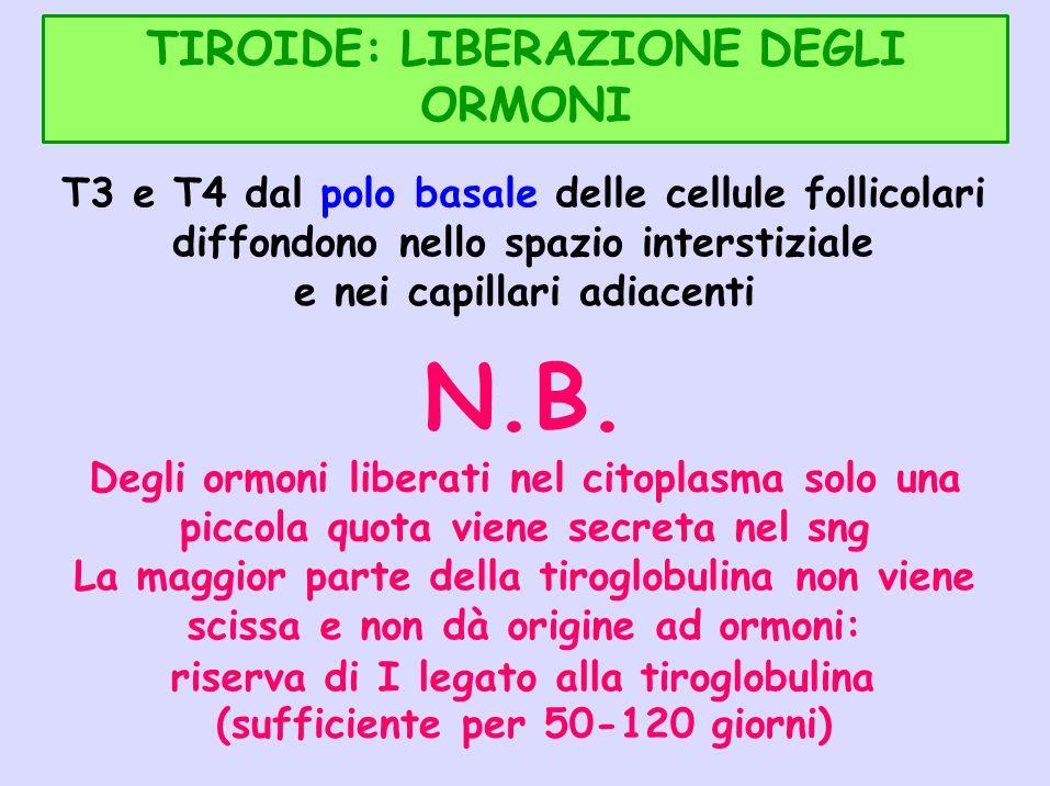 TIROIDE: LIBERAZIONE DEGLI ORMONI T3 e T4 dal polo basale delle cellule follicolari diffondono nello spazio interstiziale e nei capillari adiacenti N.