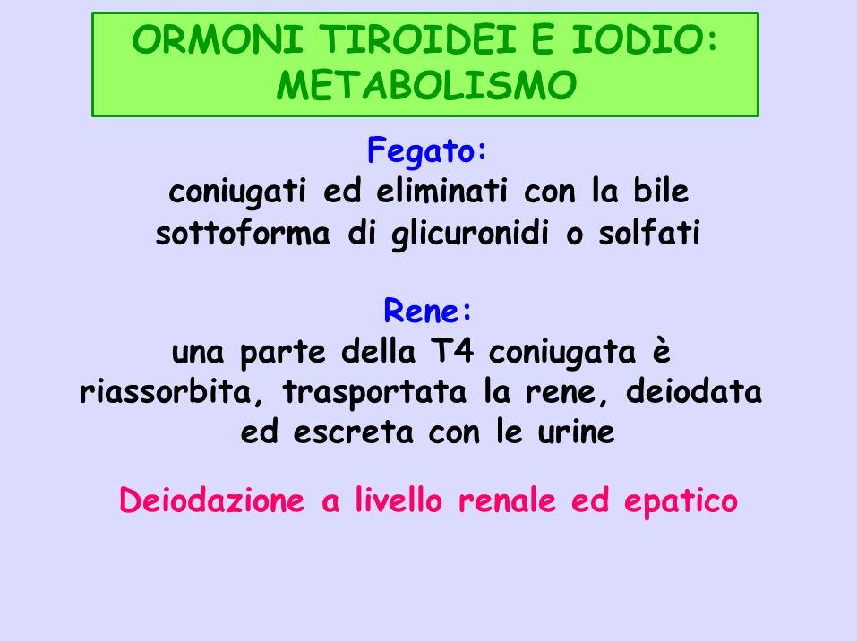 ORMONI TIROIDEI E IODIO: METABOLISMO Fegato: coniugati ed eliminati con la bile sottoforma di glicuronidi o solfati Rene: una parte della T4 coniugata