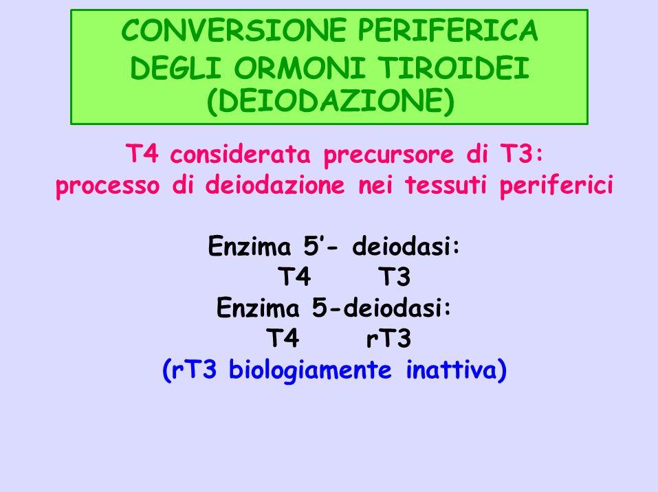 CONVERSIONE PERIFERICA DEGLI ORMONI TIROIDEI (DEIODAZIONE) T4 considerata precursore di T3: processo di deiodazione nei tessuti periferici Enzima 5- d