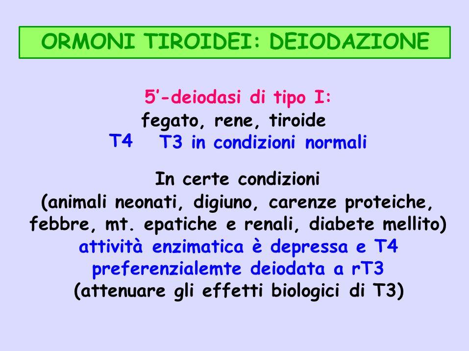 ORMONI TIROIDEI: DEIODAZIONE T4 5-deiodasi di tipo I: fegato, rene, tiroide T3 in condizioni normali In certe condizioni (animali neonati, digiuno, ca