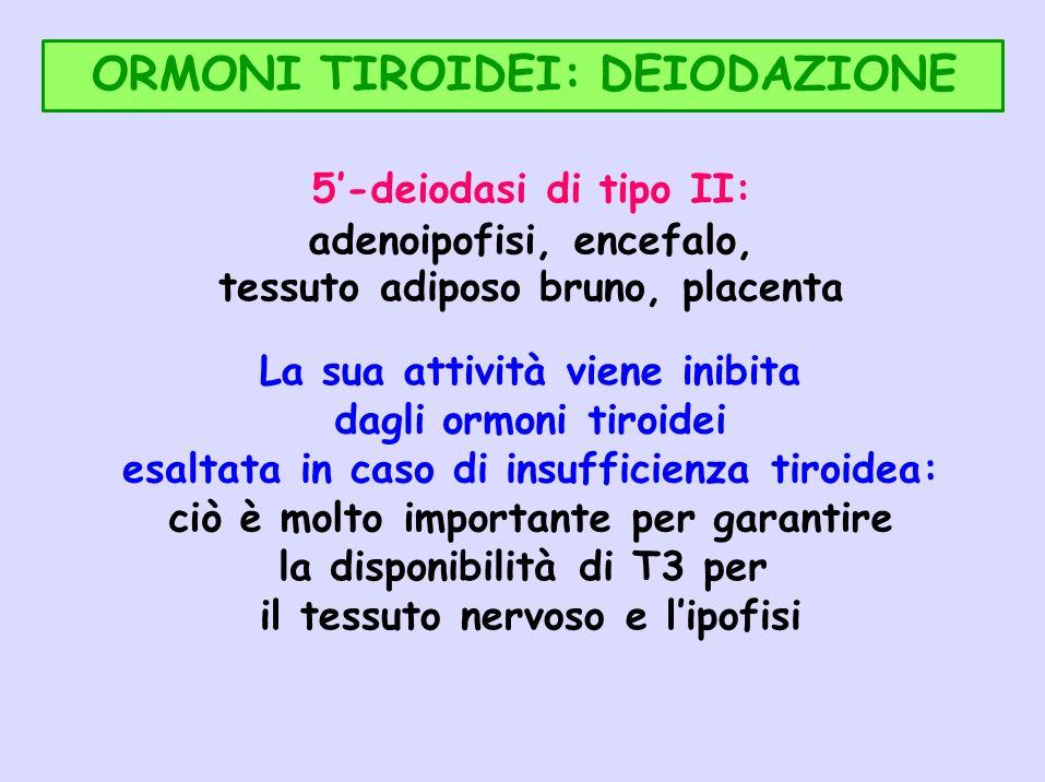 ORMONI TIROIDEI: DEIODAZIONE 5-deiodasi di tipo II: adenoipofisi, encefalo, tessuto adiposo bruno, placenta La sua attività viene inibita dagli ormoni