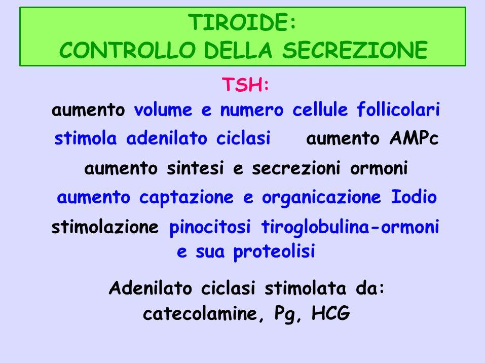 TIROIDE: CONTROLLO DELLA SECREZIONE TSH: aumento volume e numero cellule follicolari stimola adenilato ciclasiaumento AMPc aumento sintesi e secrezion