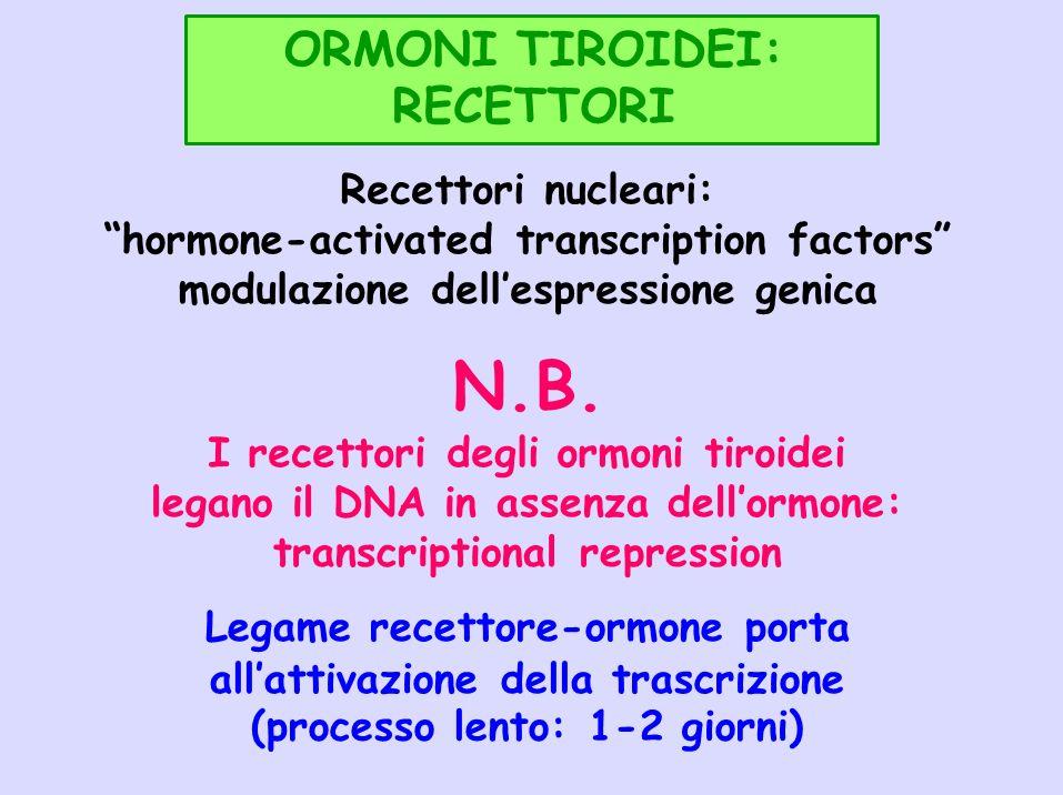 ORMONI TIROIDEI: RECETTORI Recettori nucleari: hormone-activated transcription factors modulazione dellespressione genica N.B. I recettori degli ormon