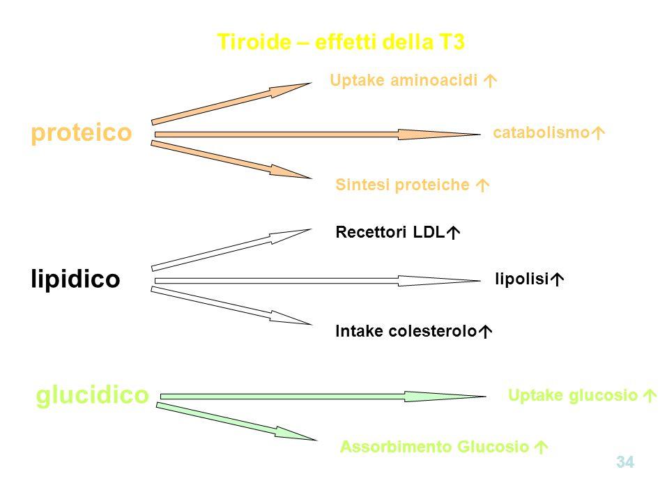 Tiroide – effetti della T3 proteico lipidico glucidico Uptake aminoacidi catabolismo Sintesi proteiche Intake colesterolo Uptake glucosio Assorbimento