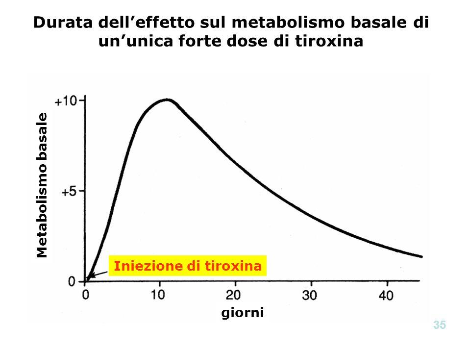 Metabolismo basale giorni Iniezione di tiroxina Durata delleffetto sul metabolismo basale di ununica forte dose di tiroxina 35