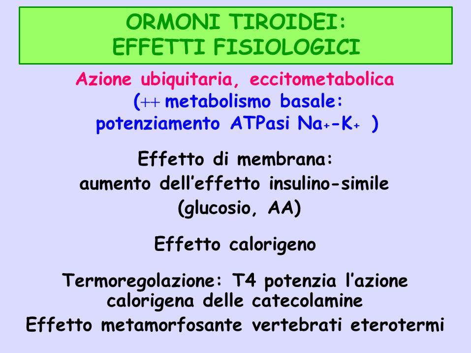 ORMONI TIROIDEI: EFFETTI FISIOLOGICI Azione ubiquitaria, eccitometabolica ( metabolismo basale: potenziamento ATPasi Na + -K + ) Effetto di membrana:
