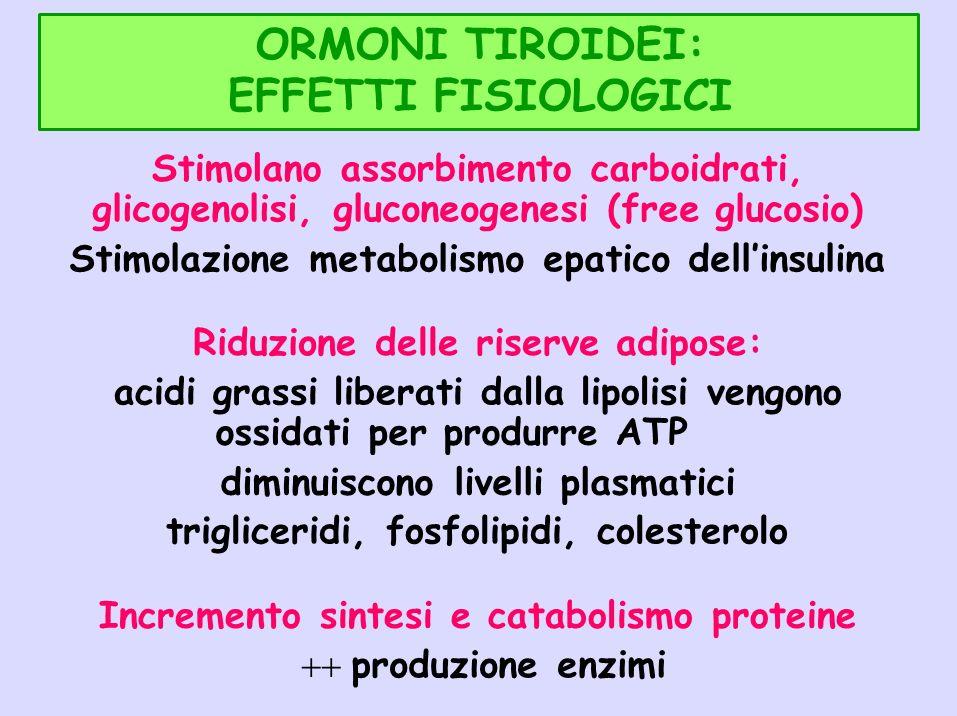 ORMONI TIROIDEI: EFFETTI FISIOLOGICI Stimolano assorbimento carboidrati, glicogenolisi, gluconeogenesi (free glucosio) Stimolazione metabolismo epatic