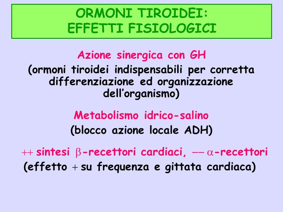 ORMONI TIROIDEI: EFFETTI FISIOLOGICI Azione sinergica con GH (ormoni tiroidei indispensabili per corretta differenziazione ed organizzazione dellorgan