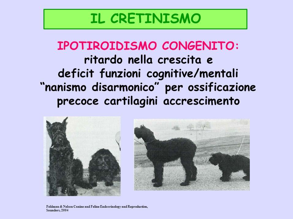IL CRETINISMO IPOTIROIDISMO CONGENITO: ritardo nella crescita e deficit funzioni cognitive/mentali nanismo disarmonico per ossificazione precoce carti