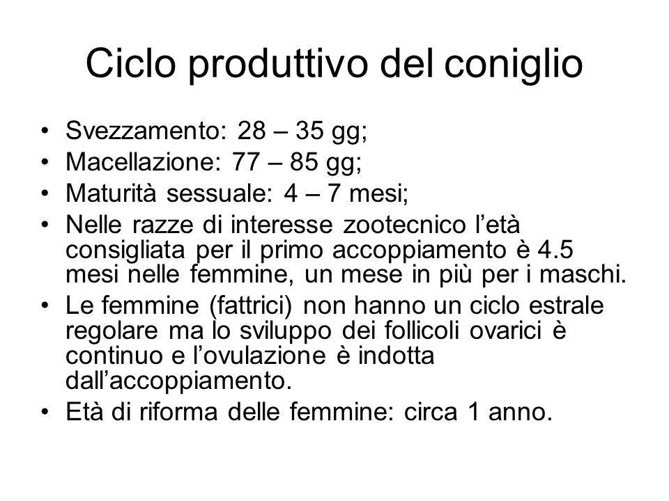 Ciclo produttivo del coniglio Svezzamento: 28 – 35 gg; Macellazione: 77 – 85 gg; Maturità sessuale: 4 – 7 mesi; Nelle razze di interesse zootecnico le