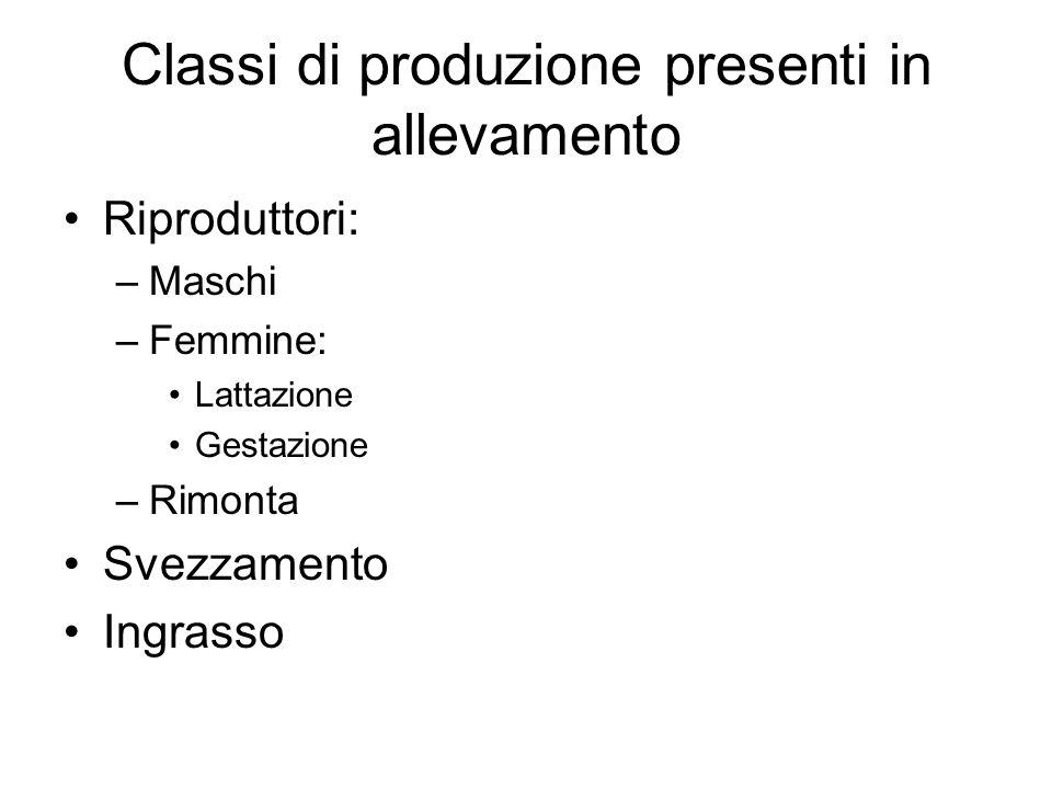 Classi di produzione presenti in allevamento Riproduttori: –Maschi –Femmine: Lattazione Gestazione –Rimonta Svezzamento Ingrasso