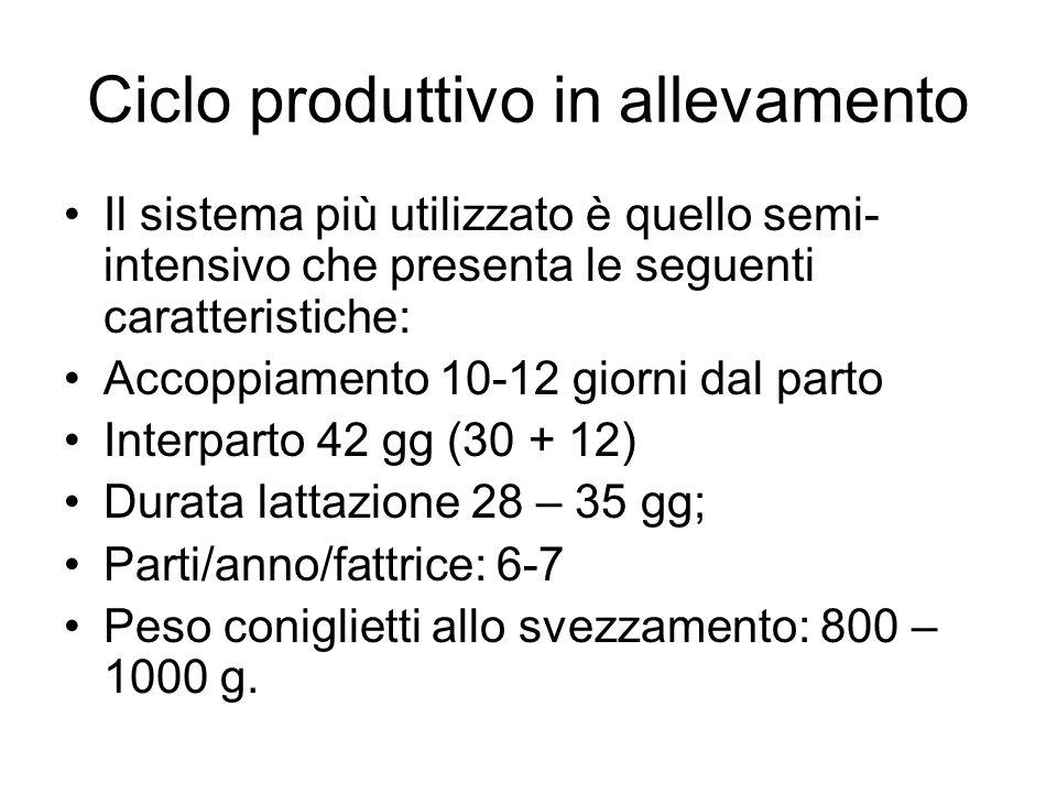 Ciclo produttivo in allevamento Il sistema più utilizzato è quello semi- intensivo che presenta le seguenti caratteristiche: Accoppiamento 10-12 giorn