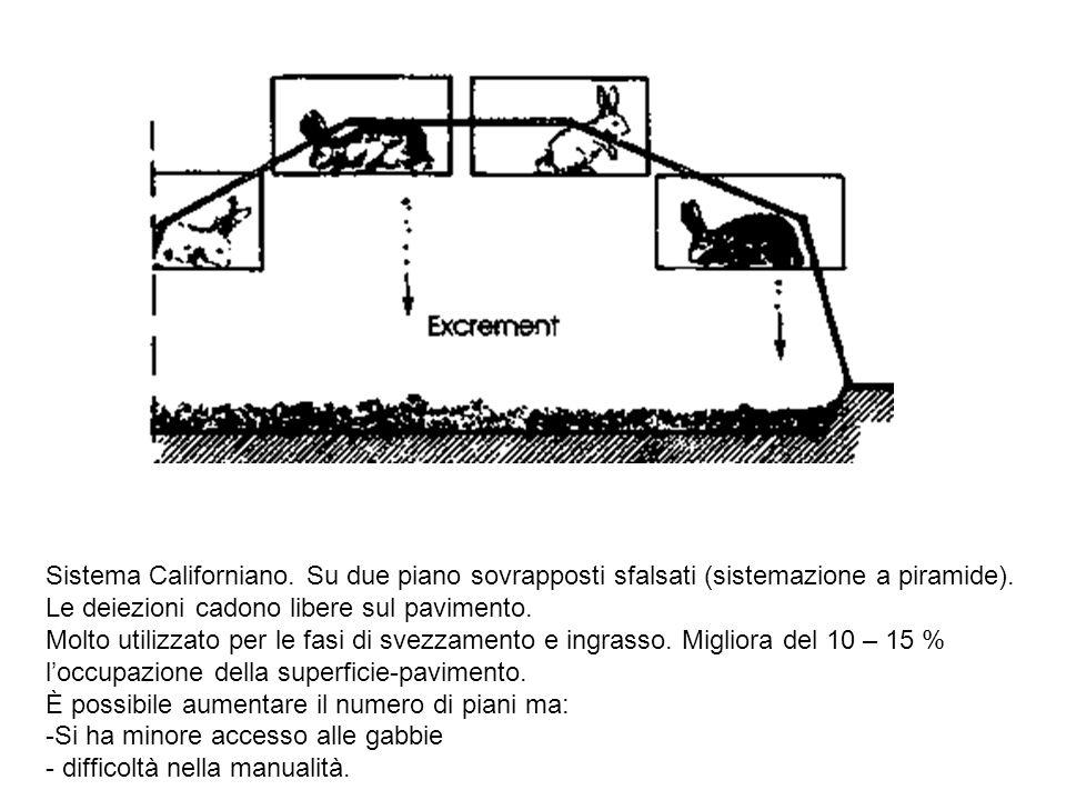 Sistema Californiano. Su due piano sovrapposti sfalsati (sistemazione a piramide). Le deiezioni cadono libere sul pavimento. Molto utilizzato per le f