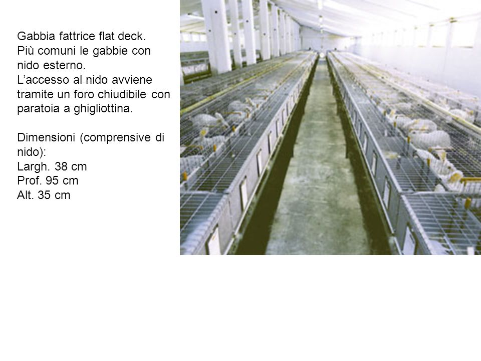 Gabbia fattrice flat deck. Più comuni le gabbie con nido esterno. Laccesso al nido avviene tramite un foro chiudibile con paratoia a ghigliottina. Dim