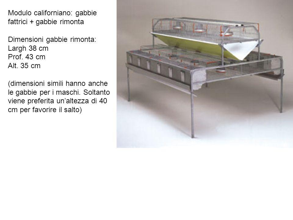 Modulo californiano: gabbie fattrici + gabbie rimonta Dimensioni gabbie rimonta: Largh 38 cm Prof. 43 cm Alt. 35 cm (dimensioni simili hanno anche le